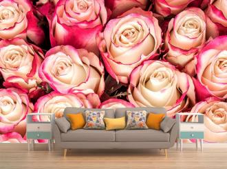 """Фотообои """"Розы розово белые, королевские, крупным планом"""""""