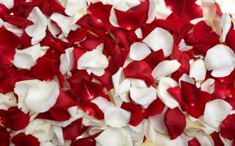"""Обои для пола """"Лепестки роз, белые красные"""". Наклейка, печать для наливного пола."""