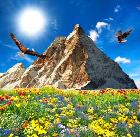 Фотообои на стену цветы ПОЛЕ ЦВЕТОВ, ГОРА, ПТИЦЫ, НЕБО