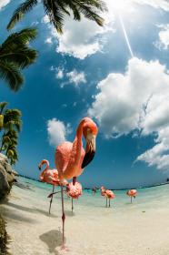 """Плитка с рисунком """"Фламинго, песок, море"""""""