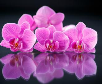"""Плитка с рисунком """"Розовые орхидеи, черный фон"""" на стену для кухни"""