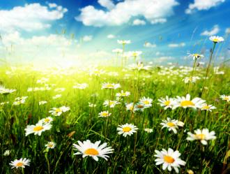 """Фотообои купить """"Большое поле ромашек, солнце, небо"""""""